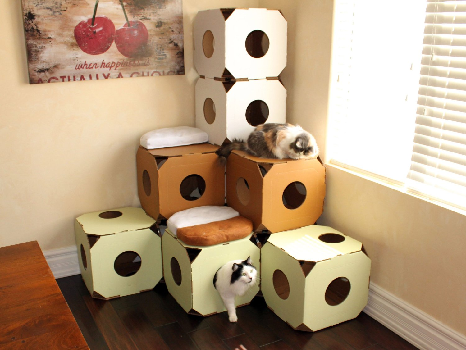Great Cat Products - Homeless to Housecats