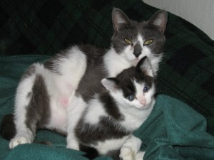 Fostering Mama Cat and Kitten - From Misery to a New Home