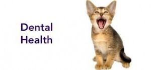 Anesthesia-Free Dental Cleaning for Cats
