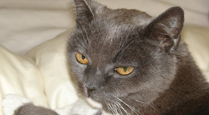 Cat Hospice Care Extends Senior Cat's Quality of Life
