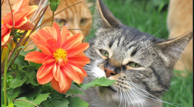 List of Toxic Plants for Cats