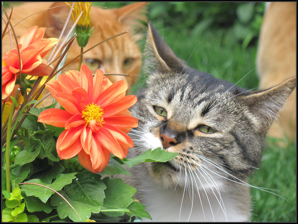 Of toxic plants for cats list of toxic plants for cats izmirmasajfo Choice Image