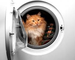 Top Danger for Cats in the Home