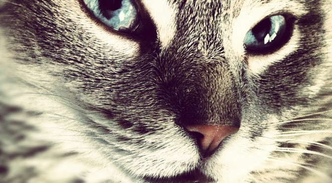 Second-Hand Cigarette Smoke Causes Cancer in Cats