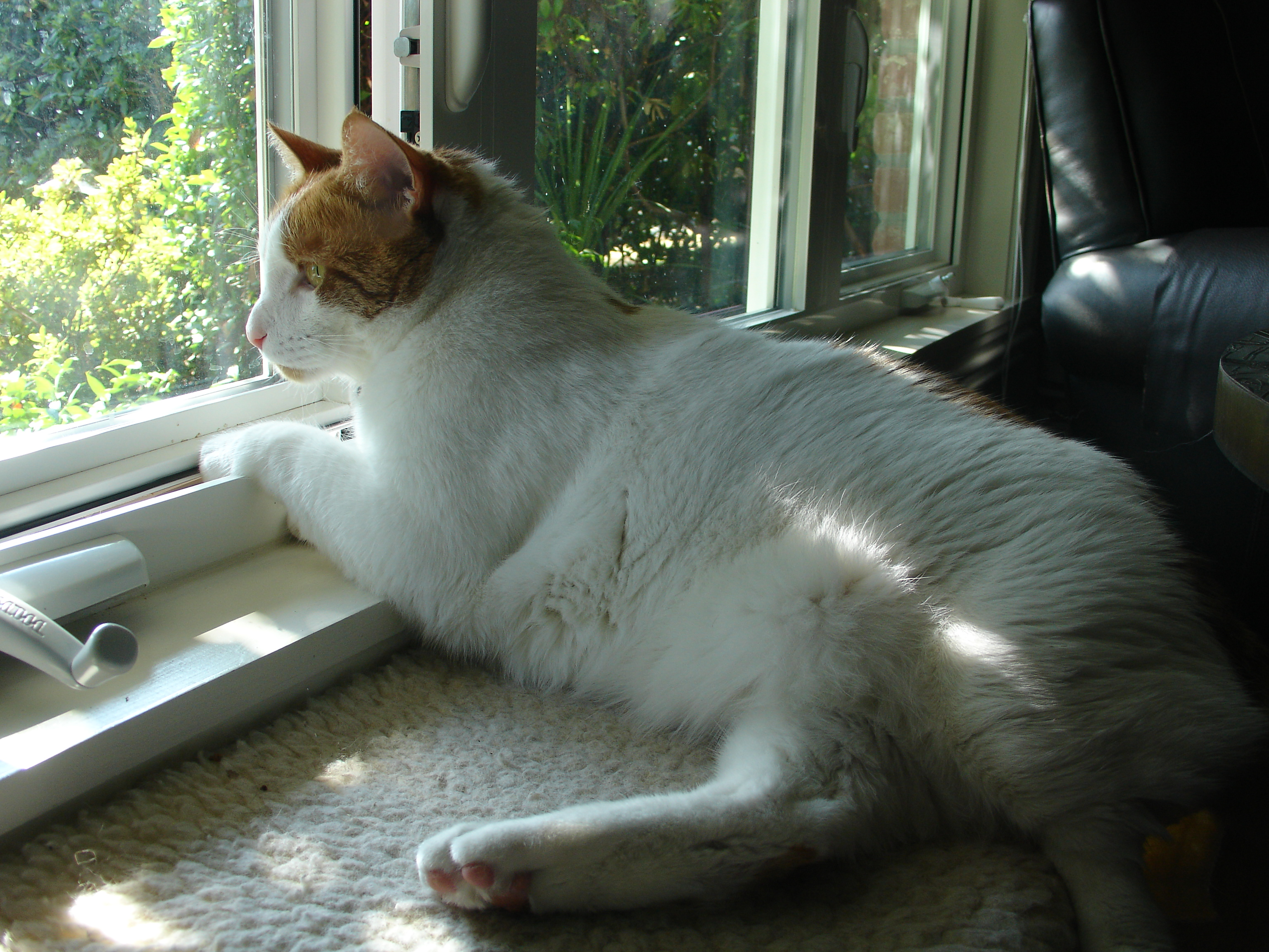 Concorso Design Your Cat : How to create a happier stress free environment for your cat