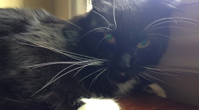 Homeless Cat Rescued With Life-Threatening Injuries