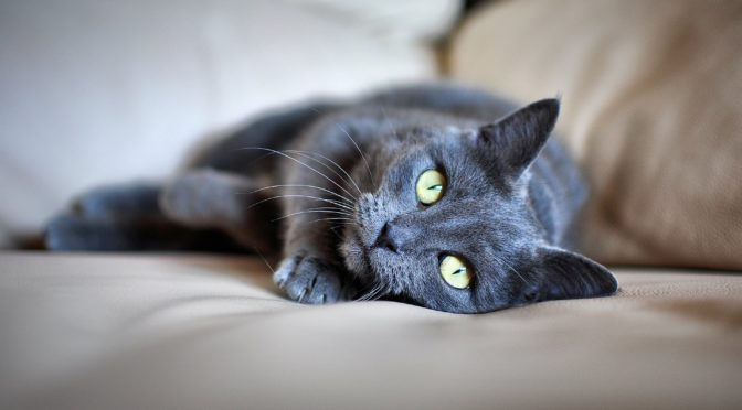 Top Dangers for Cats in the Home